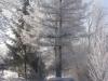 zima_w_mszanie_23