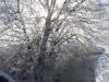 zima_w_mszanie_24